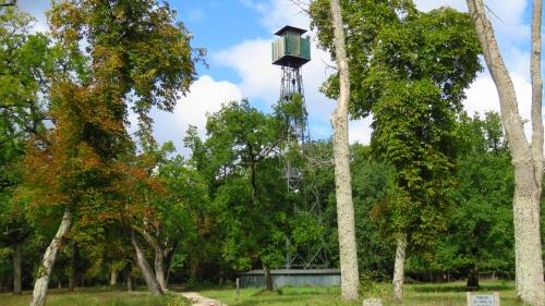 Photos de la forêt de Fontainebleau%2F20171014130016.JPG