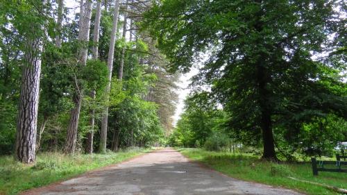 Photos de la forêt de Fontainebleau%2F20171014125243.JPG